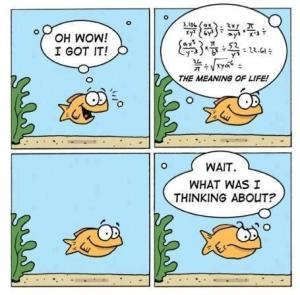 fish_calculates_the_meaning_of_life_then_forgets_it
